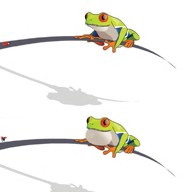 Animations grenouille Yoguik